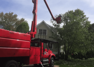 Cherry Picker Tree work